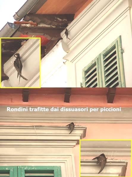 ef921642379b Gli animali in italia bis - Gabbie Vuote Firenze